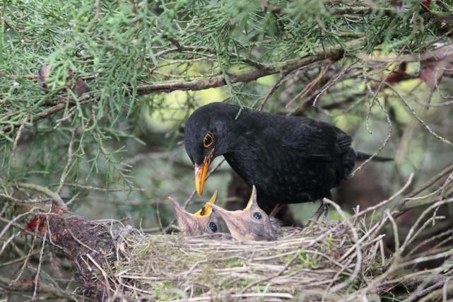 Dans les couples d'oiseaux, est-ce le mâle ou... (123RF, Bernd Juergens)