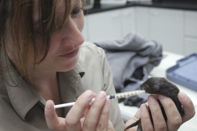 Marie-Ève Bernard, technicienne en santé animale, apporte le... (Photo Le Progrès-Dimanche, Isabelle Tremblay)