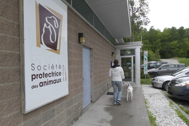 La SPA de l'Estrie occupe son bâtiment du... (Spectre Média, René Marquis)