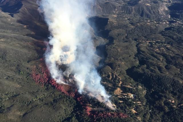 La forêt de Los Padres est très prisée... (PHOTO REUTERS)