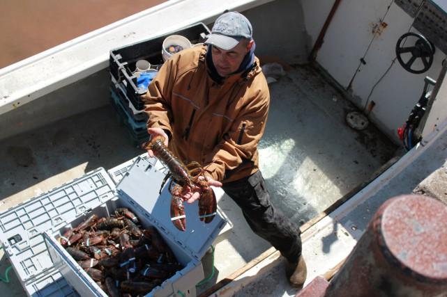 Le prix du homard pêché en Gaspésie a... (Collaboration spéciale Gilles Gagné)