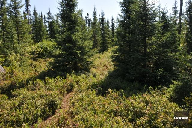 Les producteurs de la forêt privée du Saguenay-Lac-Saint-Jean reçoivent des... (Archives, Le Quotidien)