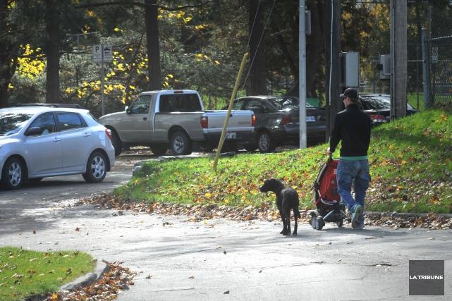 Alors que le débat se poursuit au Québec sur la présence des pitbulls dans nos... (Archives La Tribune)