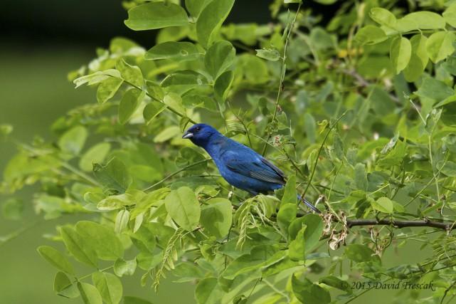 Les membres du Club d'observateurs d'oiseaux de la... (David Trescak, COOHY)