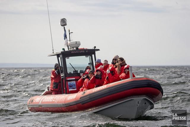 Quel bateau - le petit ou le grand - est le meilleur pour approcher les... (PHOTO DAVID BOILY, LA PRESSE)