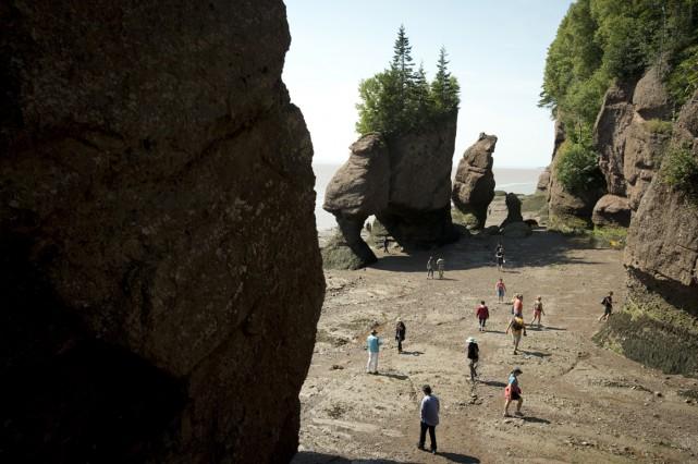Des paléontologues ont entrepris de creuser dans les... (Photo La Presse Canadienne)