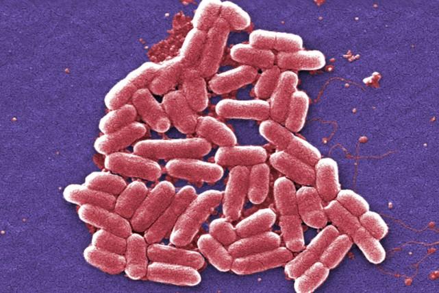 Le gène MRC-1 est redouté car il rend... (ARCHIVES AP)