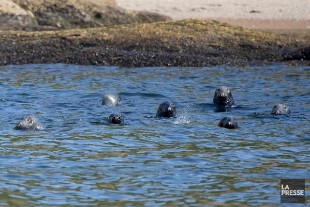 Un groupe de phoques