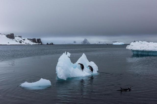 La création de deux vastes sanctuaires marins en Antarctique est de nouveau... (PHOTO ARCHIVES THE NEW YORK TIMES)