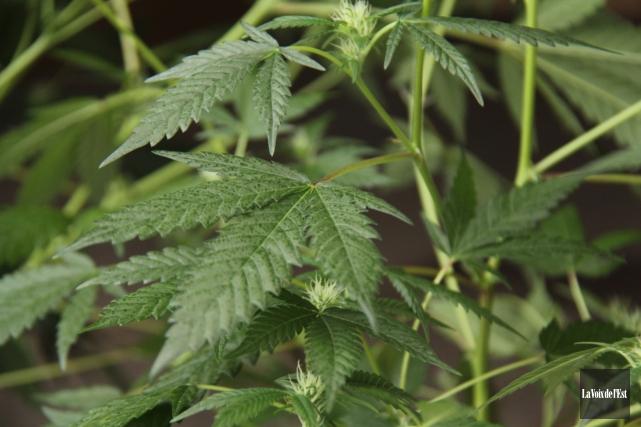 Du cannabis, de l'argent canadien et trois armes... (Archives, La Voix de l'Est)