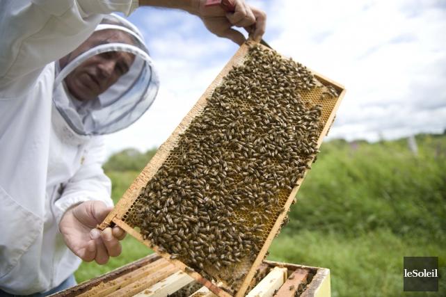 Marc Lucas, du rucher Turlu, est pionner en... (Photothèque Le Soleil)