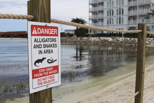 Selon les données de l'agence, 15 alligators ont... (Associated Press)