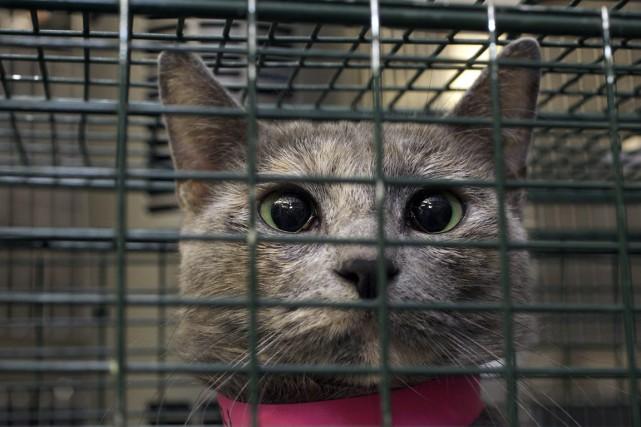 Pas moins de 751 animaux ont été secourus... (PHOTO Damian Dovarganes, archives PC)