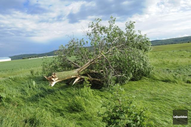Des chutes d'arbres ont été signalées à plusieurs... (Photo Le Quotidien, Gimmy Desbiens)