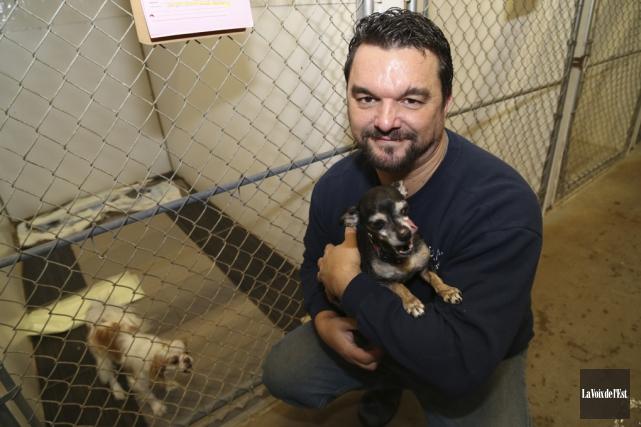 Plusieurs chiens ont été abandonnés dans les dernières... (Archives La Voix de l'Est)