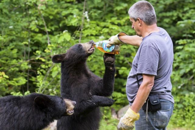 Le trappeur Jocelyn Robert vient nourrir les ours... (Andréanne Lemire)