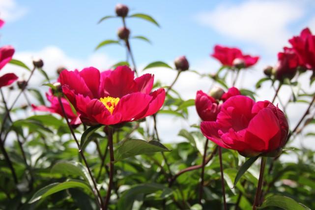 Vous adorez l'horticulture et prenez un soin jaloux de vos aménagements... (Mélissa Bradette)