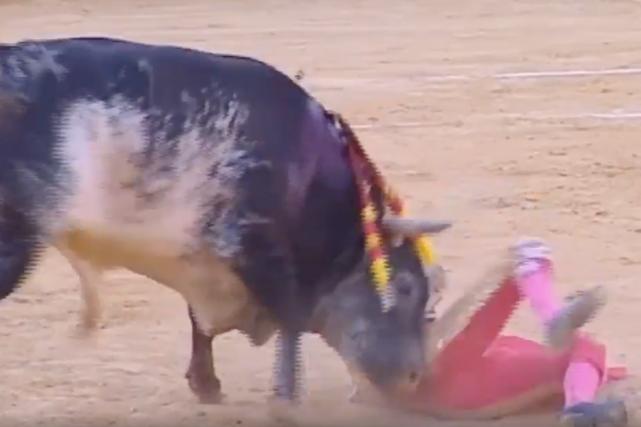 Les images télévisées de la corrida montrent comment... (Image tirée de Youtube)