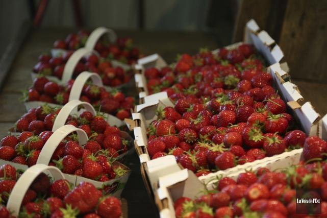 La récolte d'été a été bonne pour les... (Julie Catudal, La Voix de l'Est)