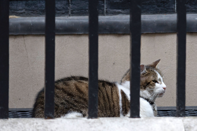 Larry le chat arpente le 10 Downing Street depuis... (Photo Oli Scarff, AFP)