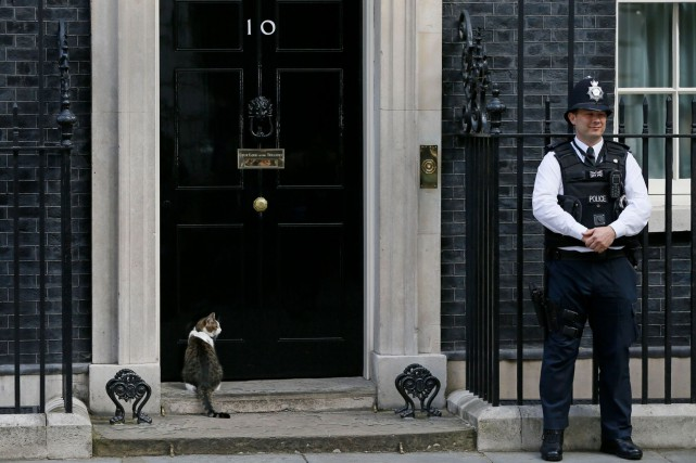 downing chatrooms After attacking itv's lucy manning yesterday larry the new downing street cat took the cat in the thatcher room cosy chat with the beckhams and james.