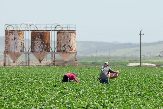 Le projet Raices y Esperanzas soutient les travailleurs... (Photo 123RF)