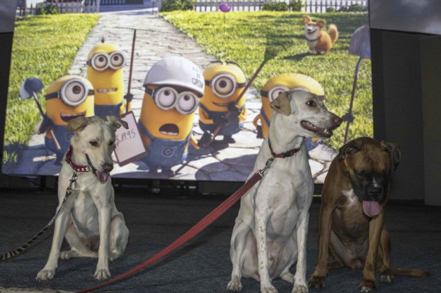 The Secret Life of Pets... (PHOTO JACK GUEZ, AFP)