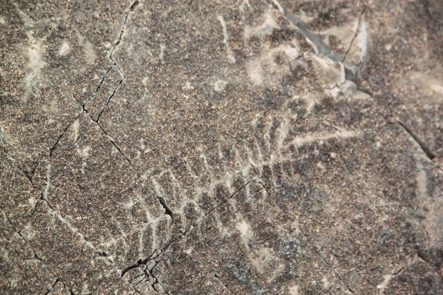 L'endroit, bien connu des paléontologues, détient quelques-uns des... (La Presse Canadienne)