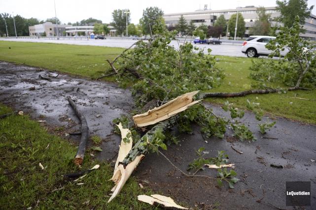 Les vents violents ont fracassé des arbres.... (Photo Le Quotidien, Jeannot Lévesque)