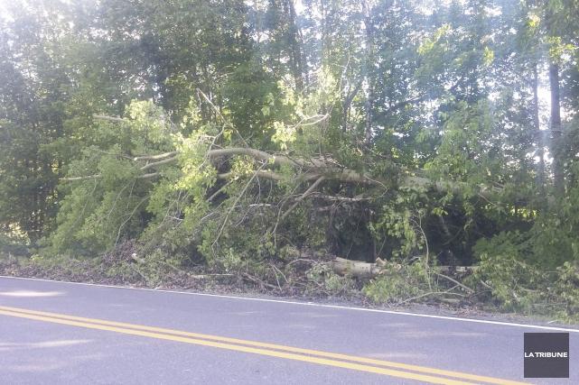 Plusieurs arbres ont été victimes de Dame nature... (La Tribune, Vincent Lambert)