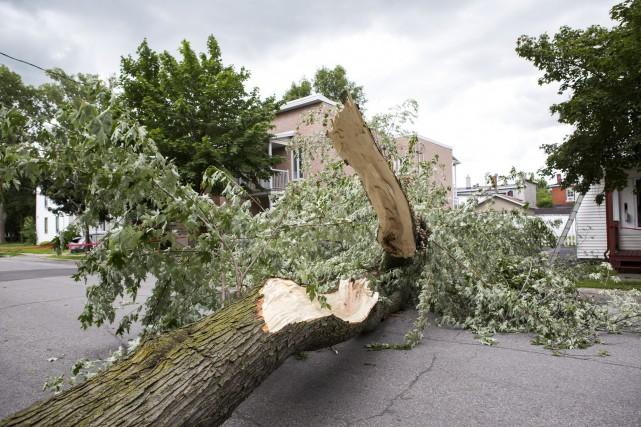 Un arbre est tombé sur la rue Laurier,... (Olivier Croteau)