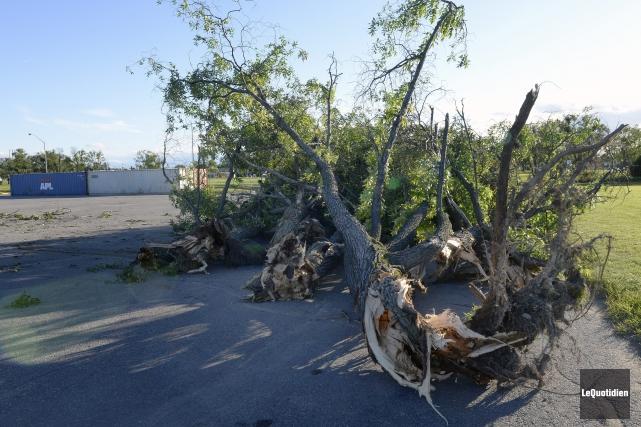 Une dizaine d'arbres sont tombés lundi en début... (Photo Le Quotidien, Jeannot Lévesque)