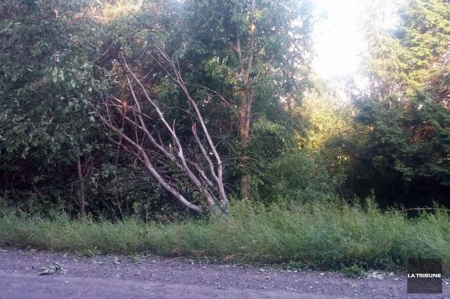 De nombreux arbres ont été endommagés à Ulverton... (La Tribune, Vincent Lambert)