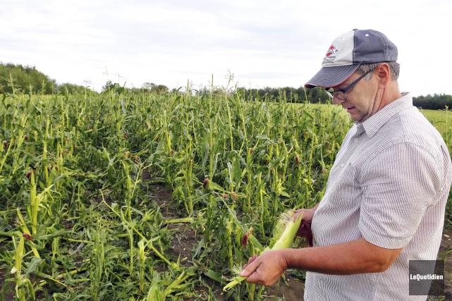 L'agriculteur Luc Collard a perdu toute sa récolte... (Photo Le Quotidien, Rocket Lavoie)