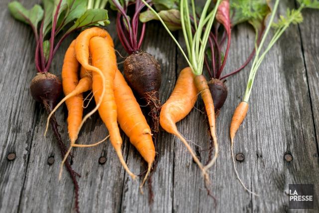 Vendre des carottes comme celles-ci permettra aux supermarchés... (123rf)