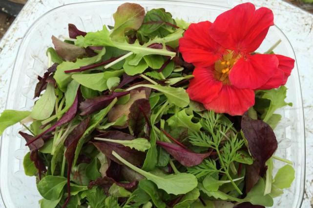 La salade de devant de porte a été... (Photo fournie par Saveurs d'ici)