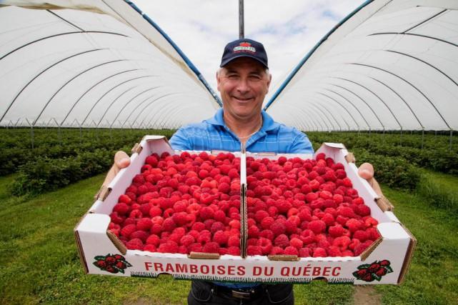Simon Charbonneau, propriétaire de FraiseBec.... (Photo Alain Roberge, La Presse)