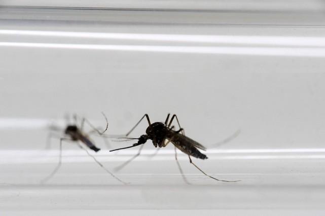 Le virus Zika se propage surtout par la... (Photo Felipe Dana, AP)