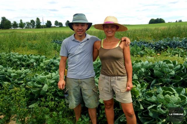 Les vols de légumes commis dans les jardins... (La Tribune, Eve Bonin)