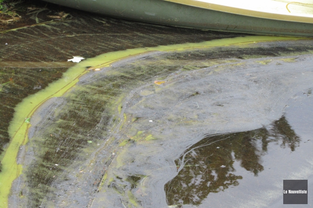 Des algues bleu-vert.... (Archives Le Nouvelliste)