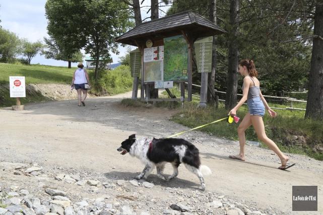 Les chiens sont plus qu'acceptés au Diable vert,... (Janick Marois, La Voix de l'Est)