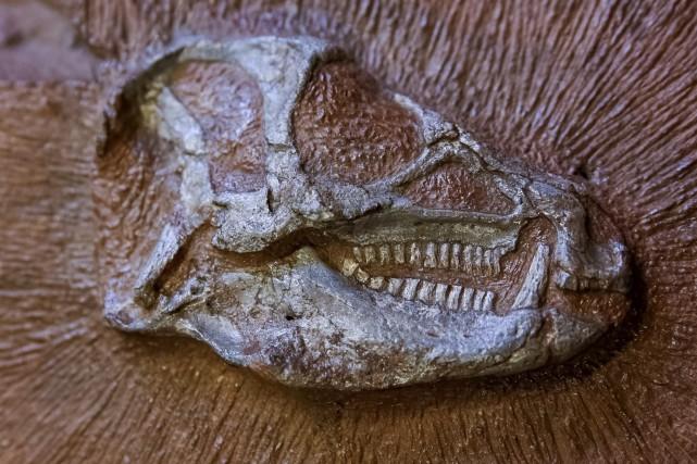 L'Heterodontosaurus tucki vivait il y a 200 millions... (AFP' Pierre Jayet)
