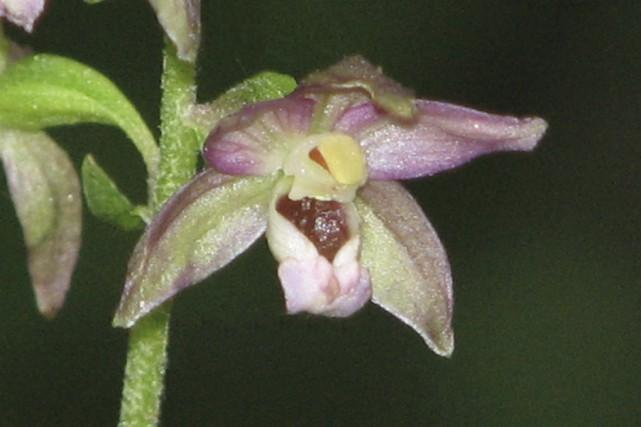 Les orchidées sont parmi les plantes les plus fascinantes, tant par leurs...