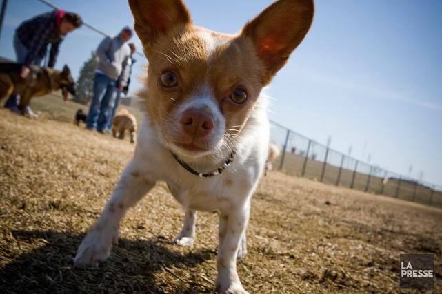 La patrouille canine remet desconstats d'infractions à des... (Photo André Pichette, archives La Presse)