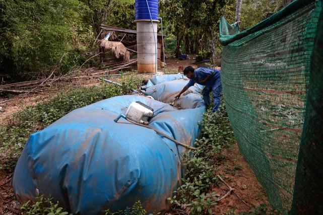 À l'arrière des maisons, d'immenses réservoirs en polyester... (photo LILLIAN SUWANRUMPHA, AFP)