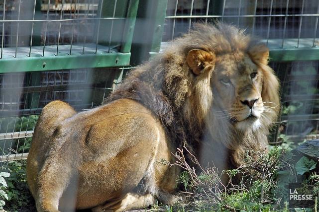 Une employée du Zoo de Granby a été... (photo fournie par le Zoo de Granby)