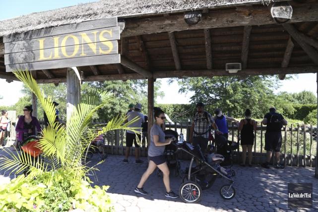 Les visiteurs qui désiraient voir les lions, lundi,... (Janick Marois, La Voix de l'Est)