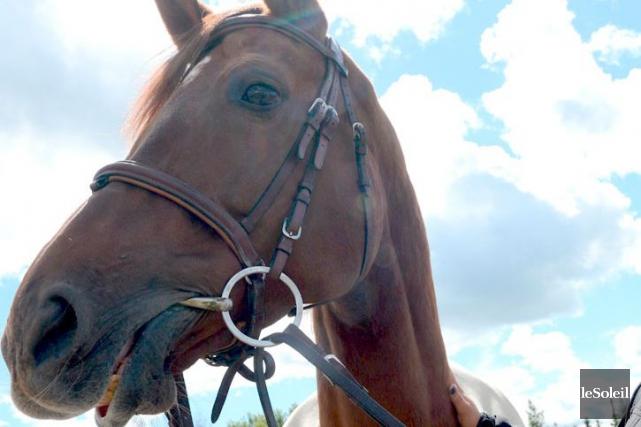 La mère d'un petit garçon percuté par un cheval poursuit les parents de la... (Photothèque Le Soleil, Patrice Laroche)