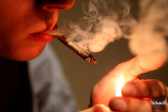 Prévenu que la légalisation du cannabis pourrait faire bondir considérablement... (Photothèque Le Soleil, AFP, François Nascimbeni)