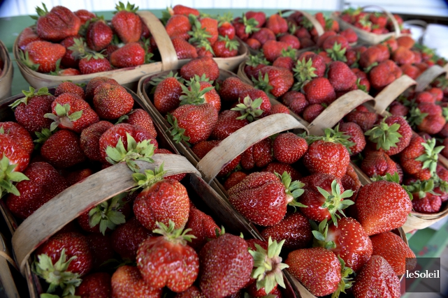 Le Symposium international de la fraise réunira quelque... (Photothèque Le Soleil, Patrice Laroche)